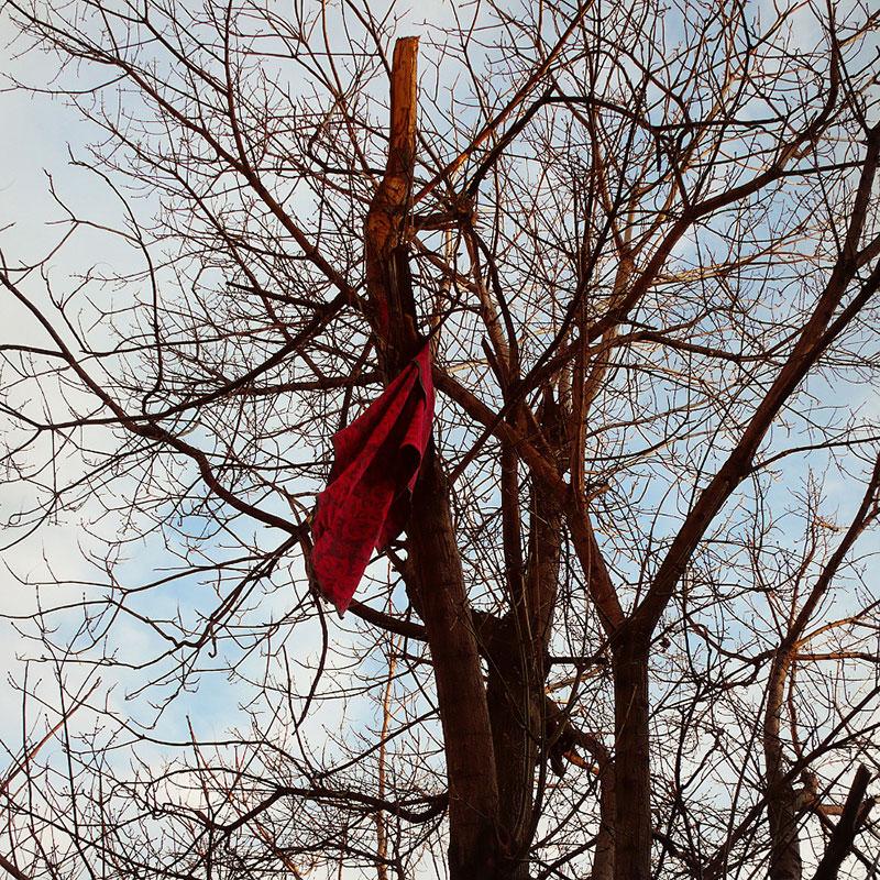 crvena marama na drvetu