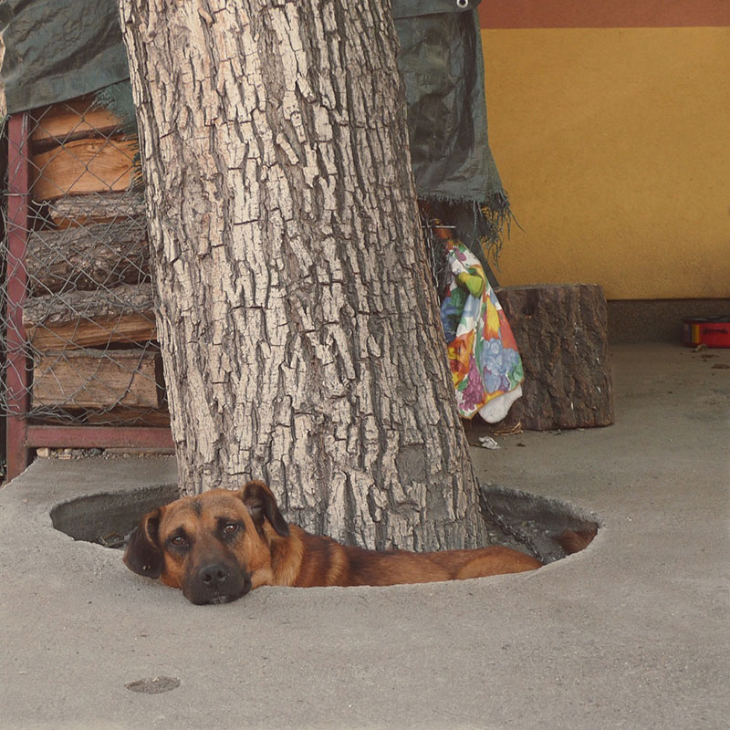 Pas leži ipod drveta