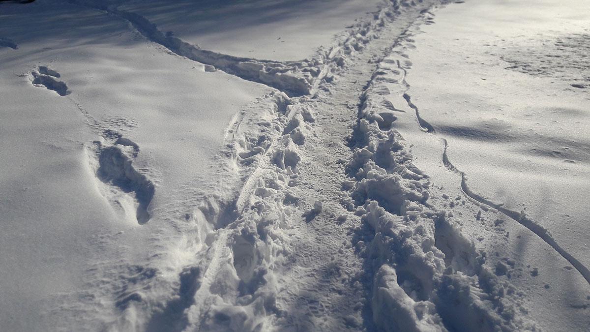 staza u snegu