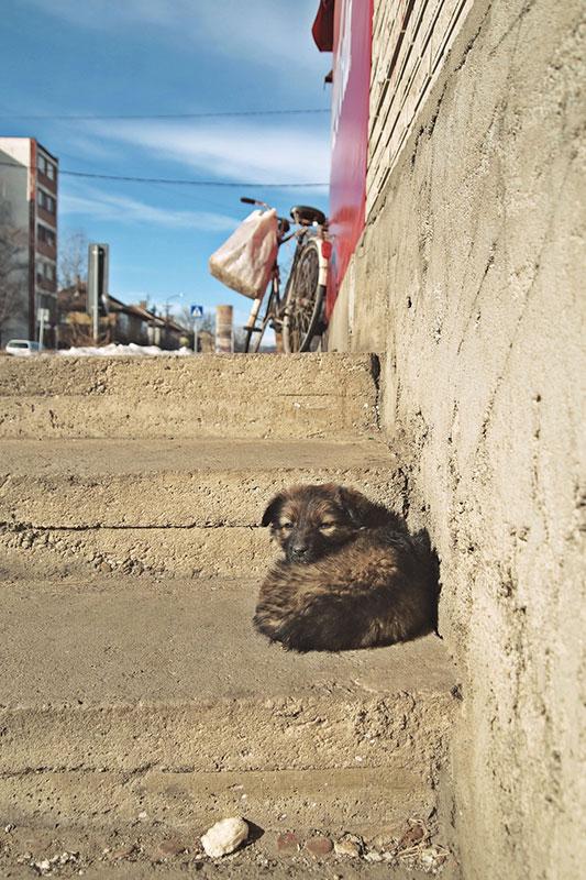 kuče na stepenicama