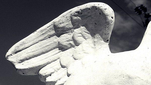 krilo ptice od kamena