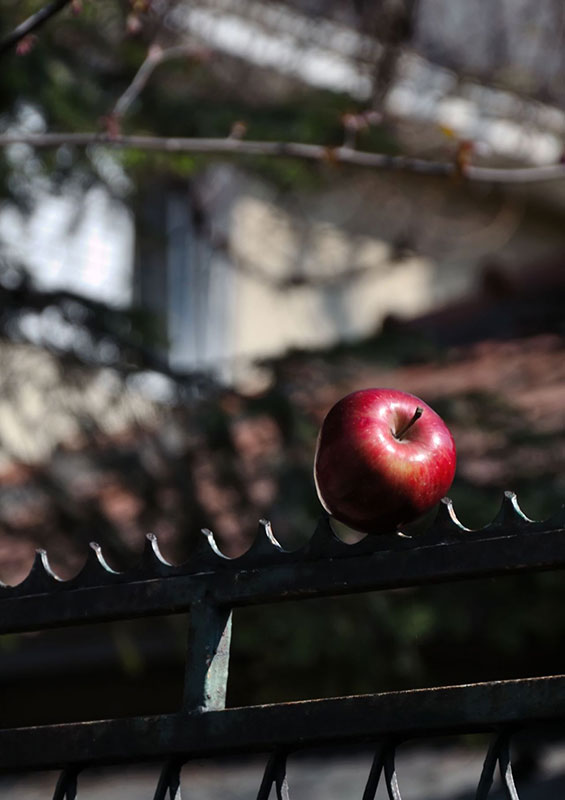 apple on a fence