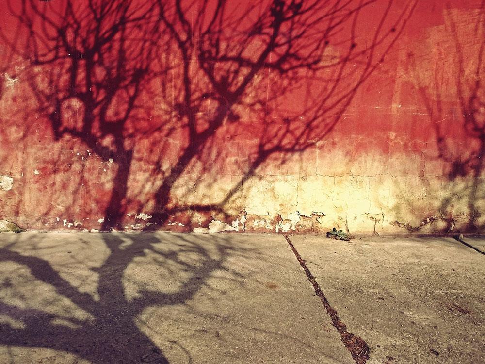 senke drveta na zidu
