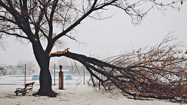 slomljena grana drveta