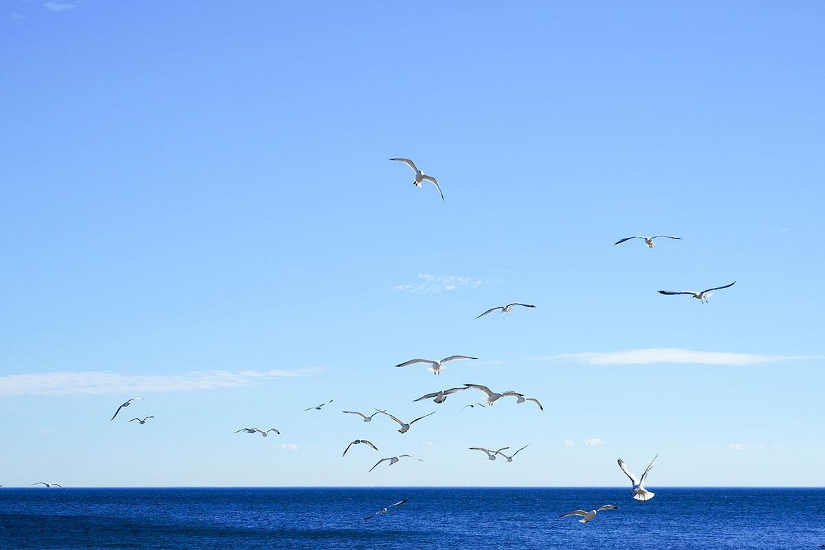 galebovi lete iznad morske pučine
