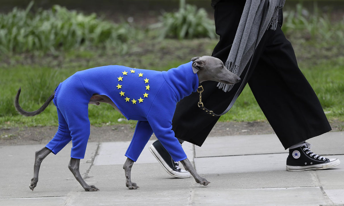 Pas u odelu nalik zastavi EU