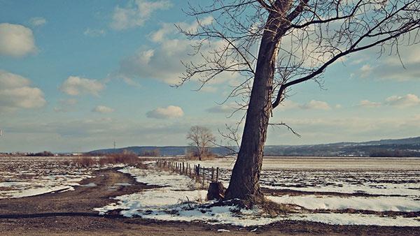 Golo drvo na raskrsnici