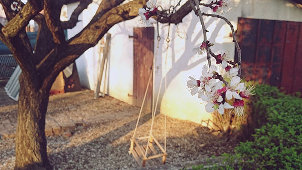 Behar na drvetu u dvorištu kuće