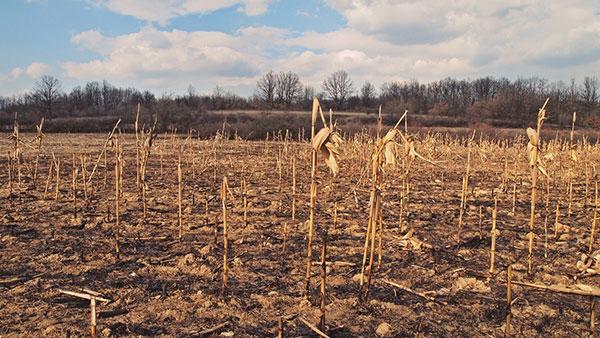 osušena zemlja u polju