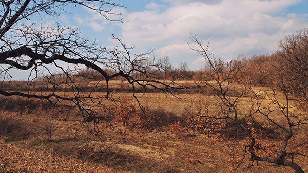 pusto polje