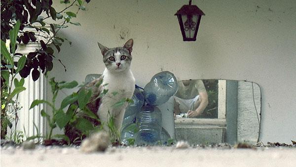 Mačka fotografisana u ogledalu
