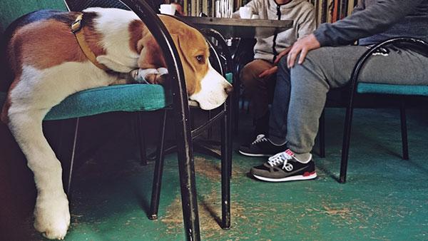 pas leži na stolici u kafiću
