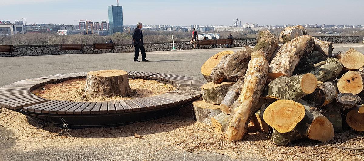 Posečeno drvo na Kalemegdanu