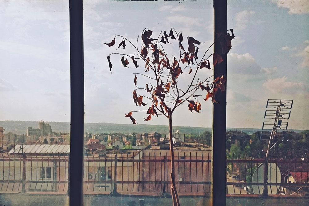 drvo sa suvim lišćem na prozoru