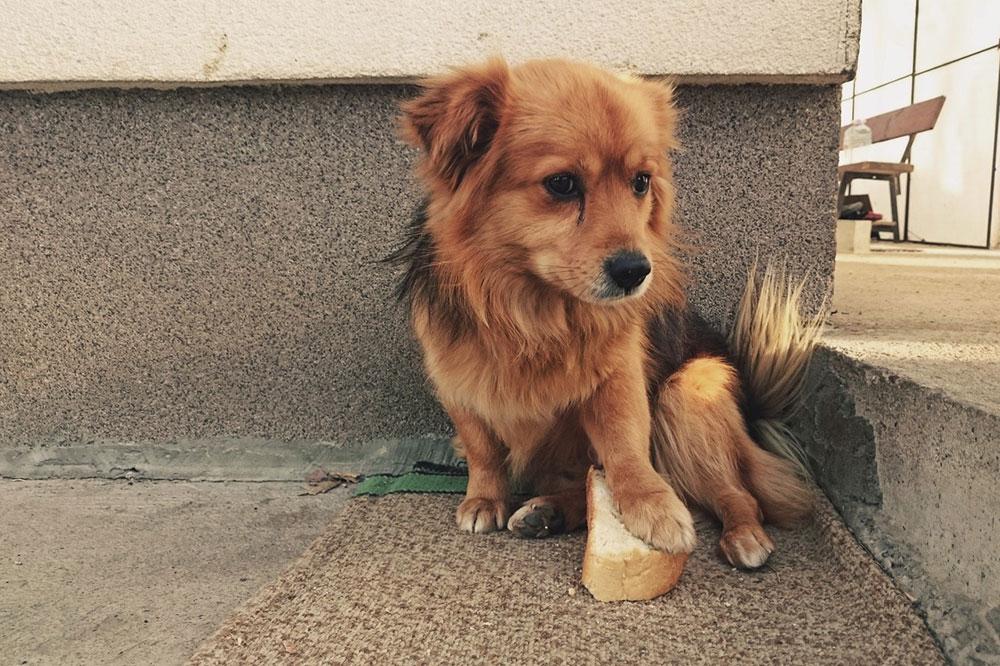 Mali pas drži šapom parče hleba