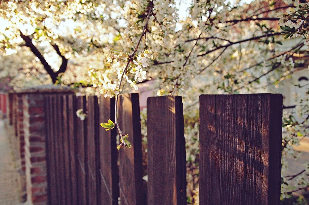 taraba iznad koje je procvetalo drvo u beharu