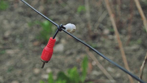 dva činča (kalbovi) vezani u čvor