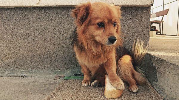 Mali pas stavio je šapu na parče hleba