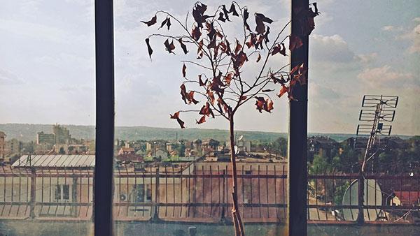 drvo sa suvim lišćem