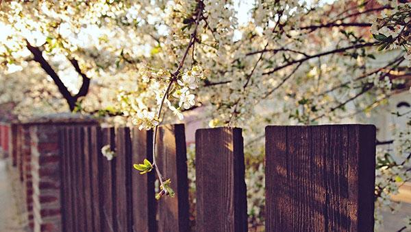 taraba iznad koje je drvo u beharu