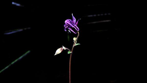 cvet u mraku