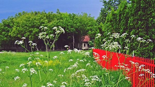 kućica u cveću