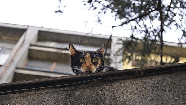 mačka viri iz zida