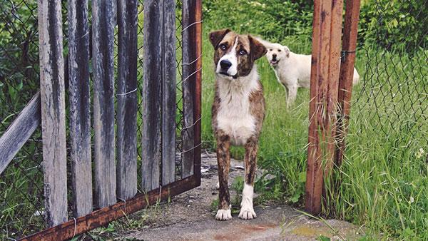 dva psa