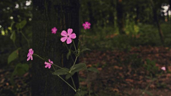cveće u šumi