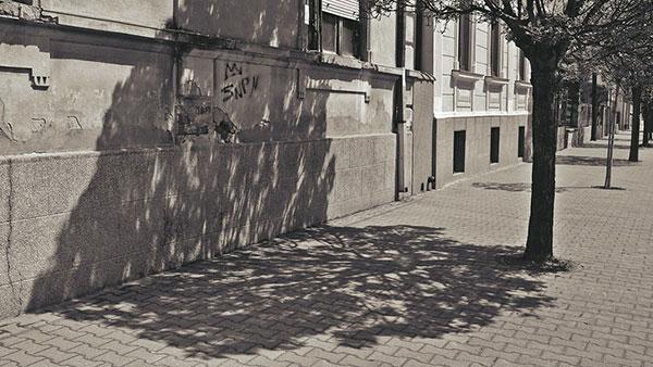 senka drveta