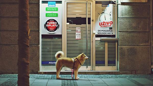 pas ispred kockarnice
