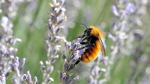 Ugrožena vrsta, foto: Michael Grant Wildlife/Alamy