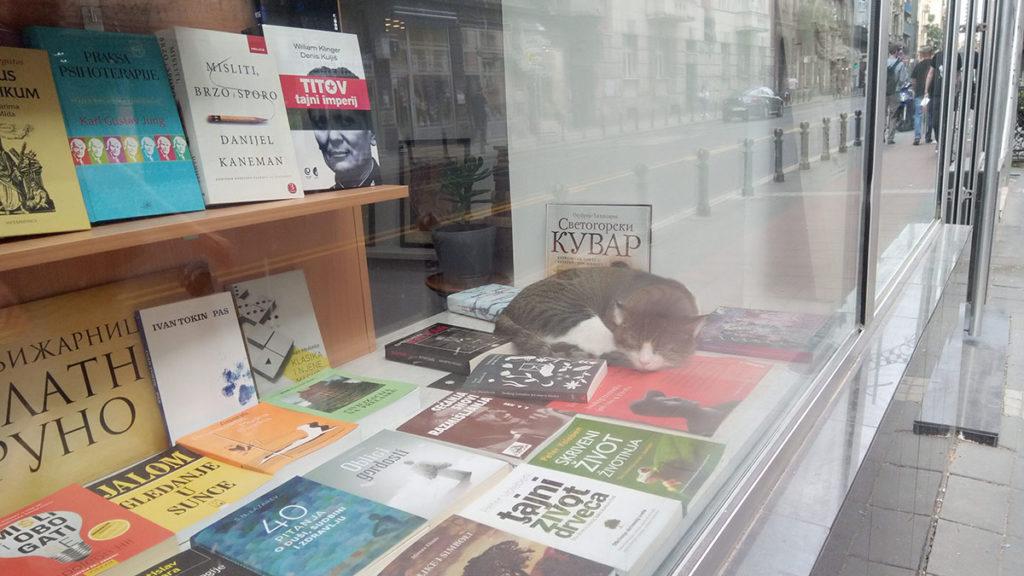 Mačka spava u izlogu knjižare