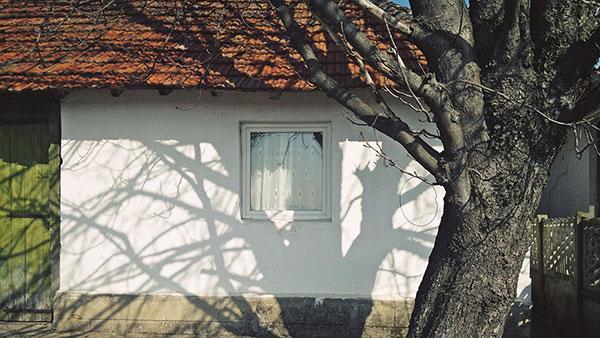 Foto: Predrag Trokicić