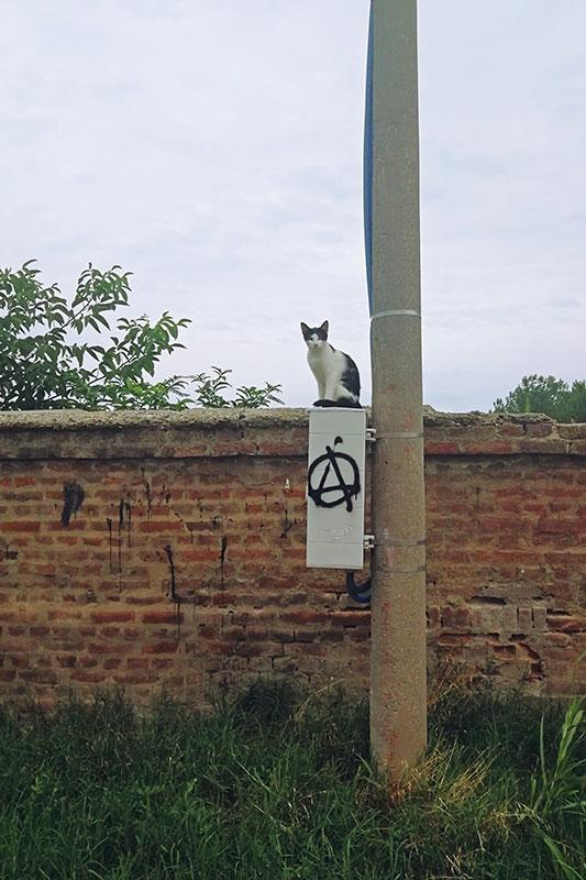 Mačka sedi na kutiji za struju na kojoj je nacrtan simbol anarhije