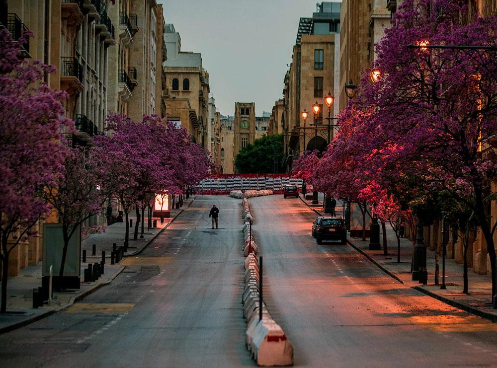 April u Bejrutu, procvetalo drveće