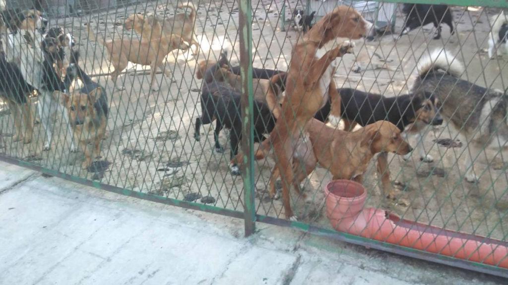 azil za pse