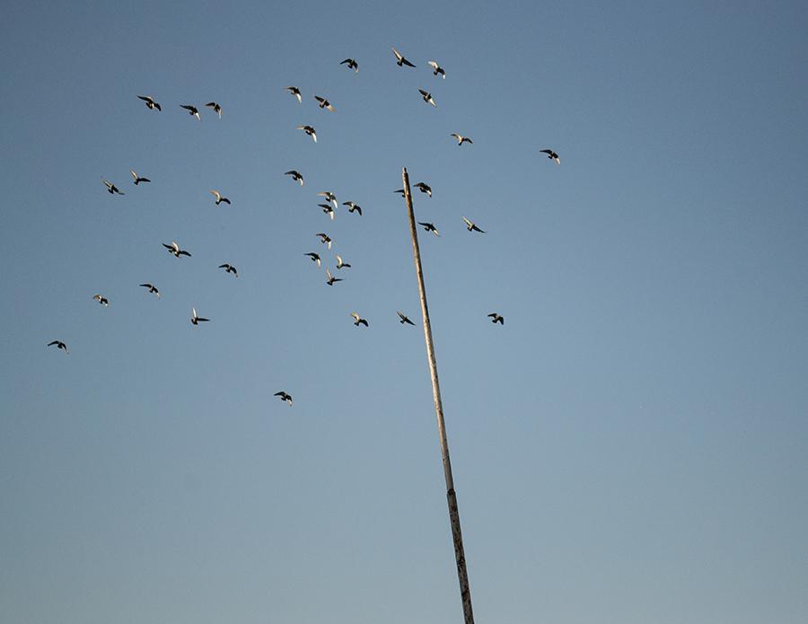 ptice na nebu