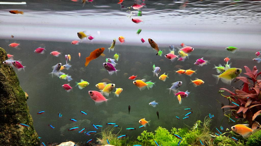 akvarijum sa ribicama