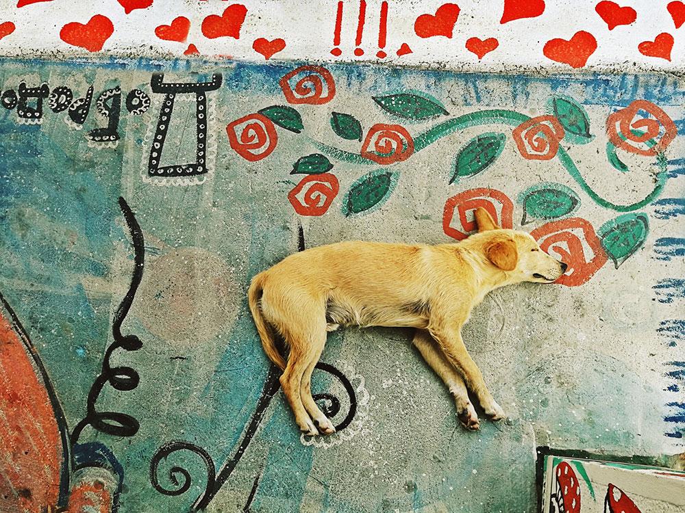pas spava na betonu
