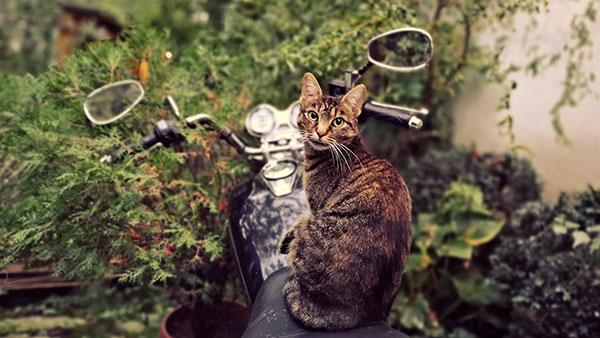 mačka na motoru