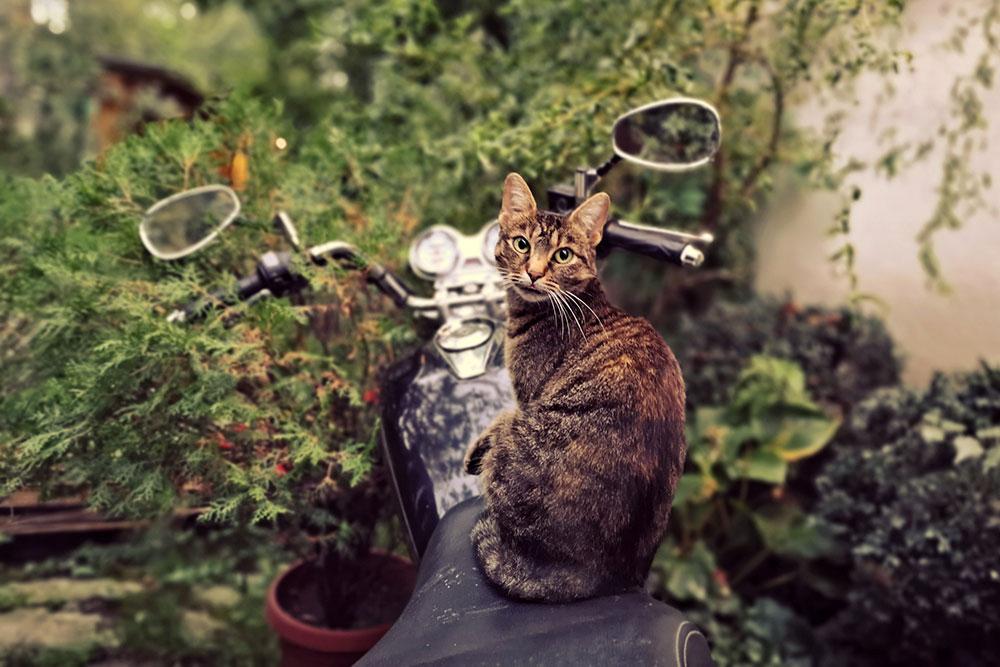mačka sedi na motoru