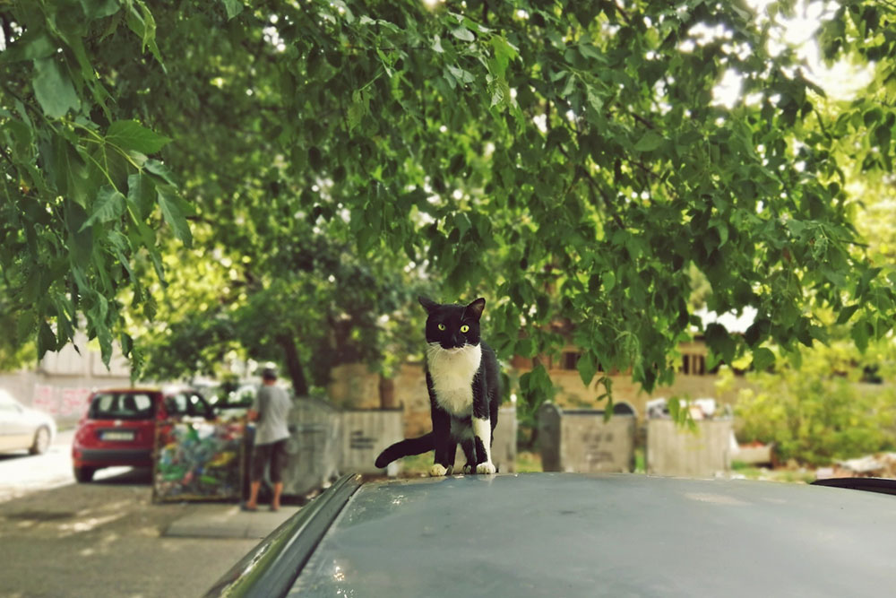 mačka stoji na krovu automobila