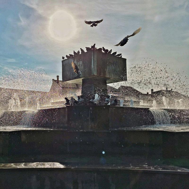 ptice se kupaju u fontani