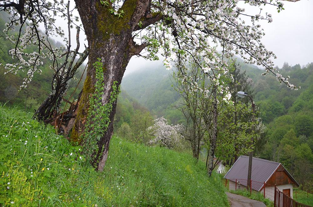 Srebrenica 2018, foto: S. Stanković