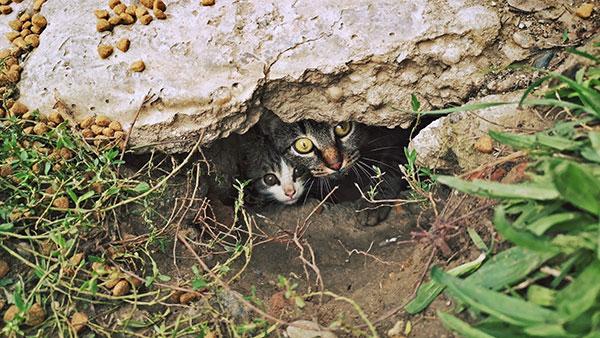 dve mačke ispod kamena vire