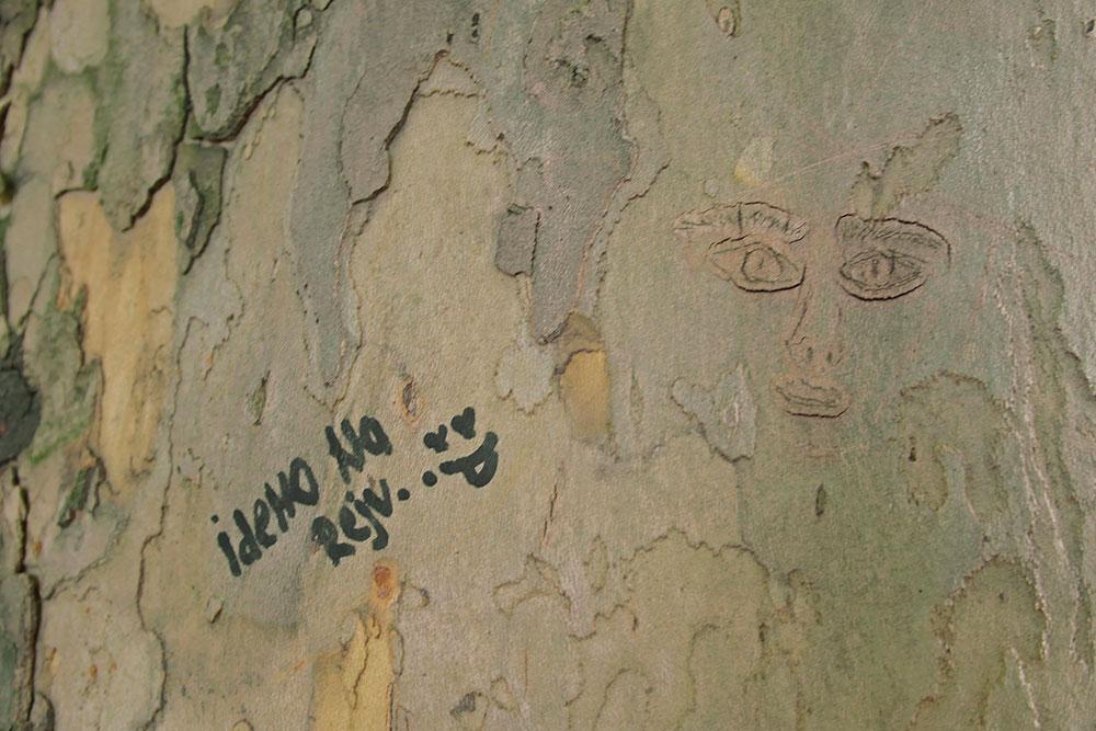 Natpis na kori drveta: Idemo na rejv.