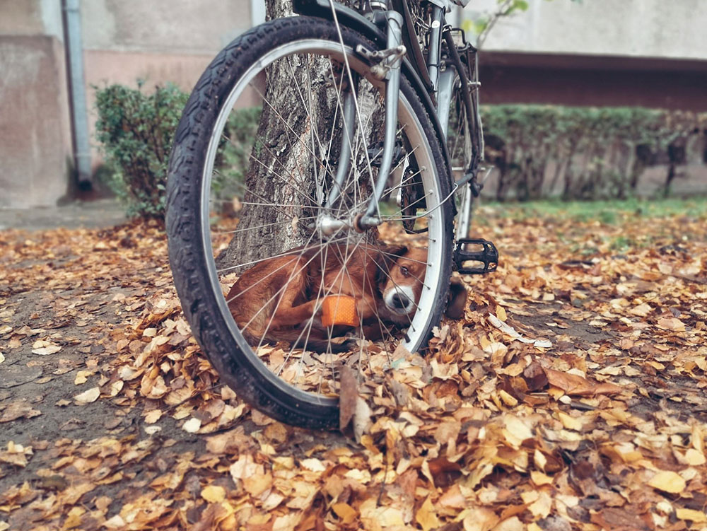 bicikl ispod koga se sakrio mali pas
