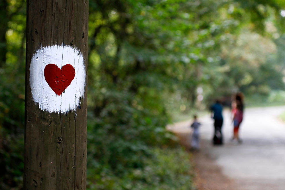 srce nacrtano na drvetu