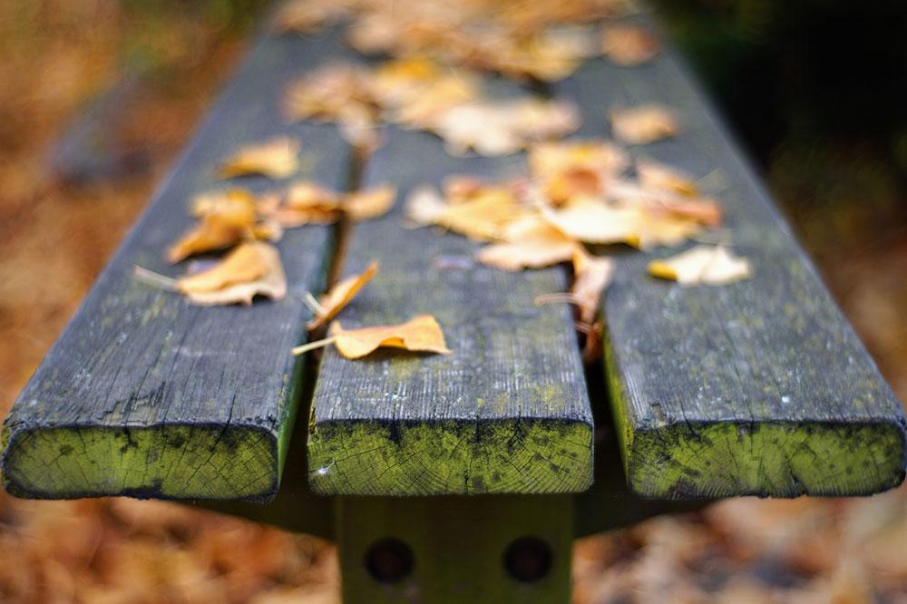 klupa pokrivena lišćem